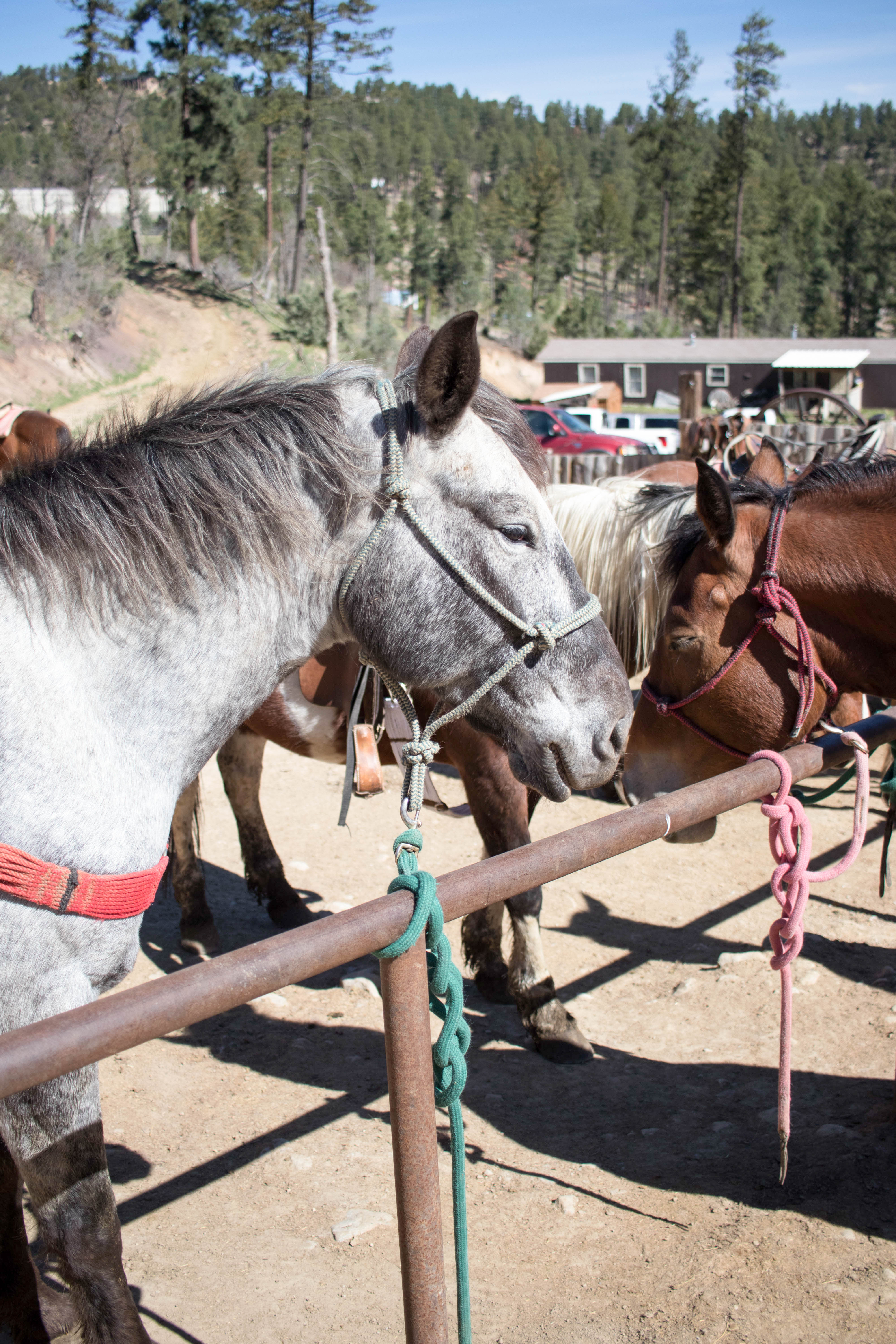 grindstone stables pony rides Ruidoso New Mexico #horses #ponyrides #ruidoso